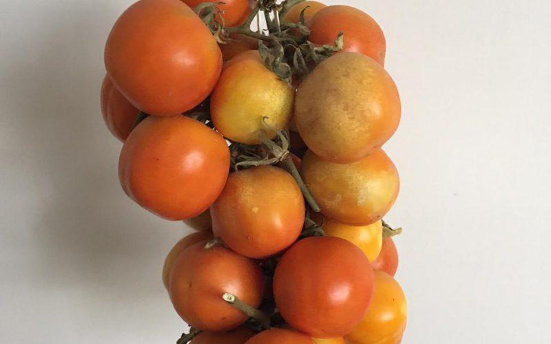Pomodorini a pendolo