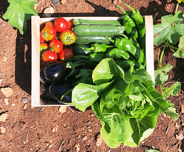 Le nostre verdure stagionali