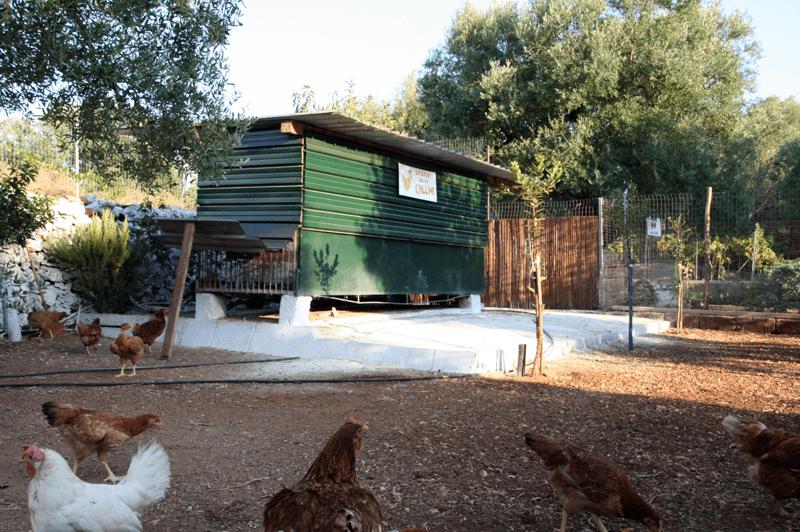 Il nostro pollaio